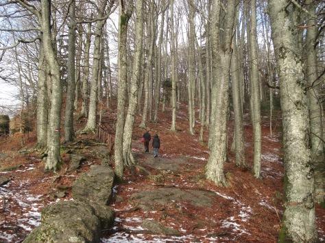 Sentiero nel bosco che porta al Santuario